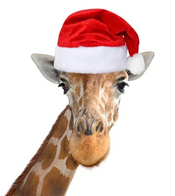 Giraffe wearing a Christmas Santa hat