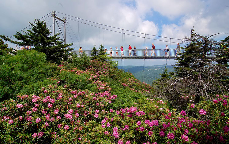 distance view of swinging bridge with people walking across