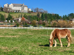 horse in a pasture with Biltmore Estate building in the background