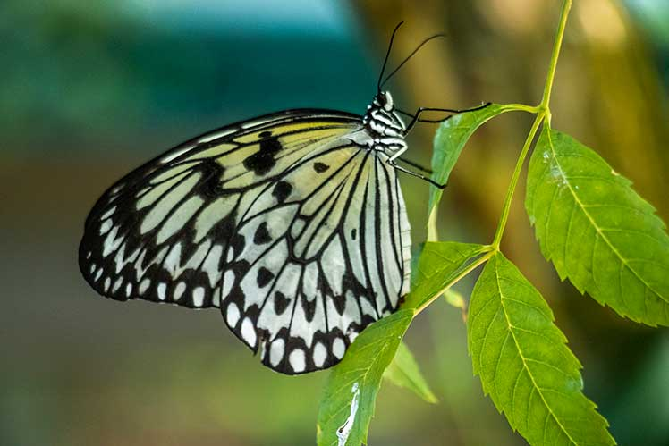 close up look at a butterfly