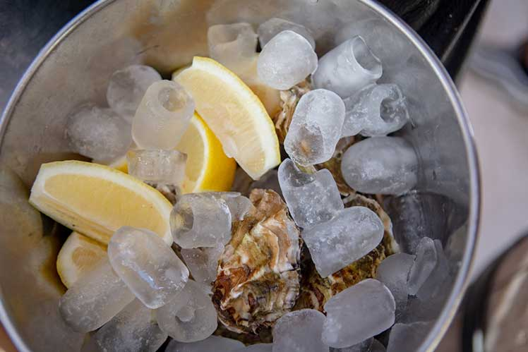 Fresh oysters in a bucket with ice and lemon wedges