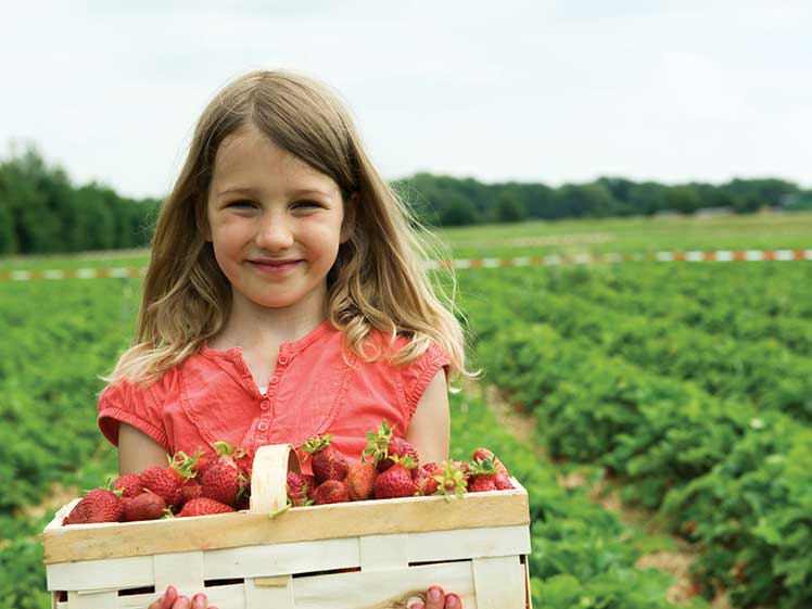 girl poses with a basket of fresh strawberries on a strawberry farm